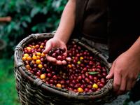 Кофейные зерна всегда в центре внимания